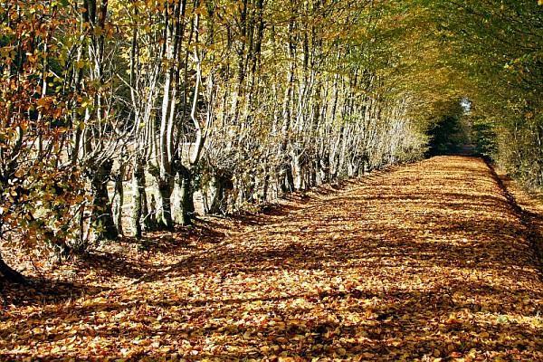 Forêt de Senonches, étangs et fôret