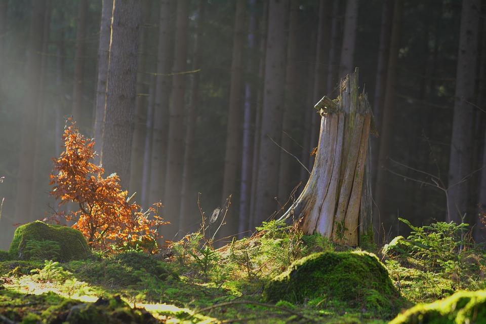 magic-forest-1984254_960_720