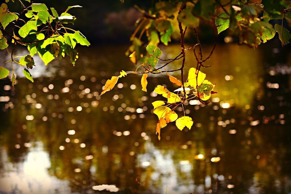 autumn-leaf-3764316_960_720