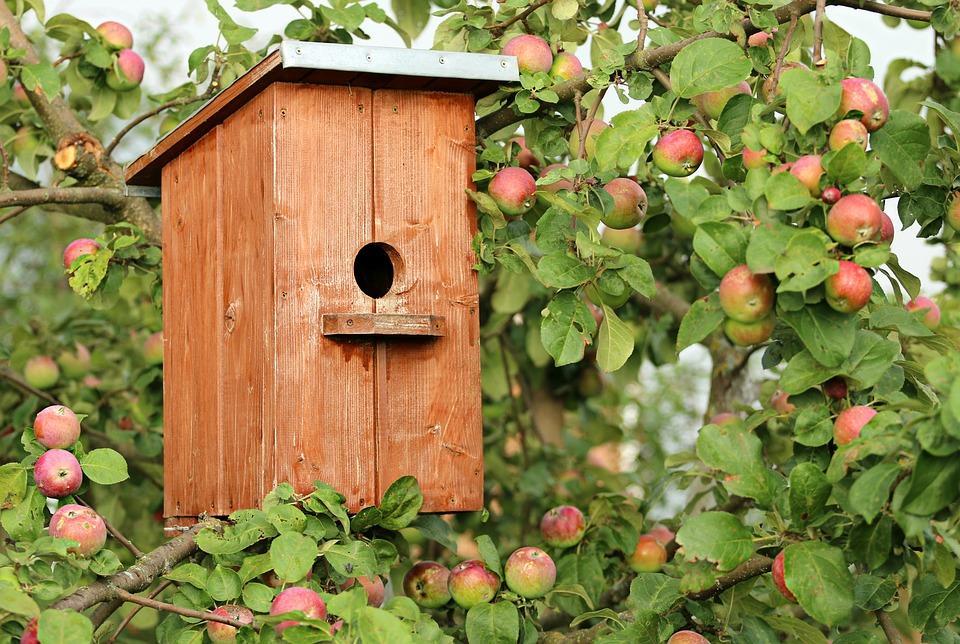 birdhouse-1537806_960_720