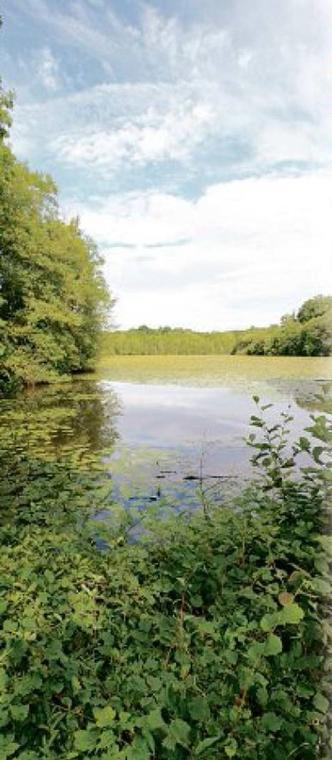 L'étang des panses