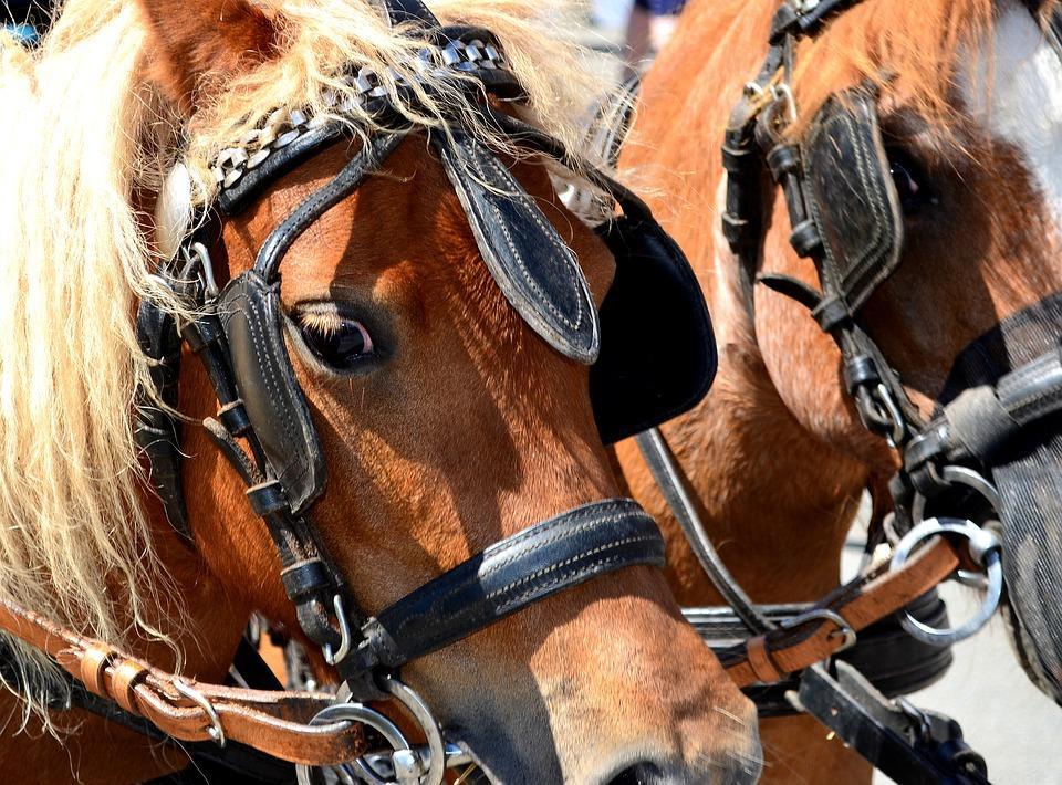 pony-2580874_960_720