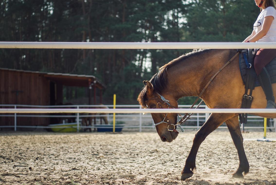 the-horse-4268618_1920 Kasjan Farbisz de Pixabay