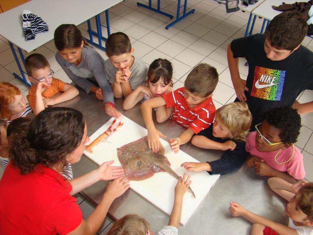 Haliotika-la-Cite-de-la-pech---atelier-cuisine-enfants---Guilvinec---Pays-Bigouden