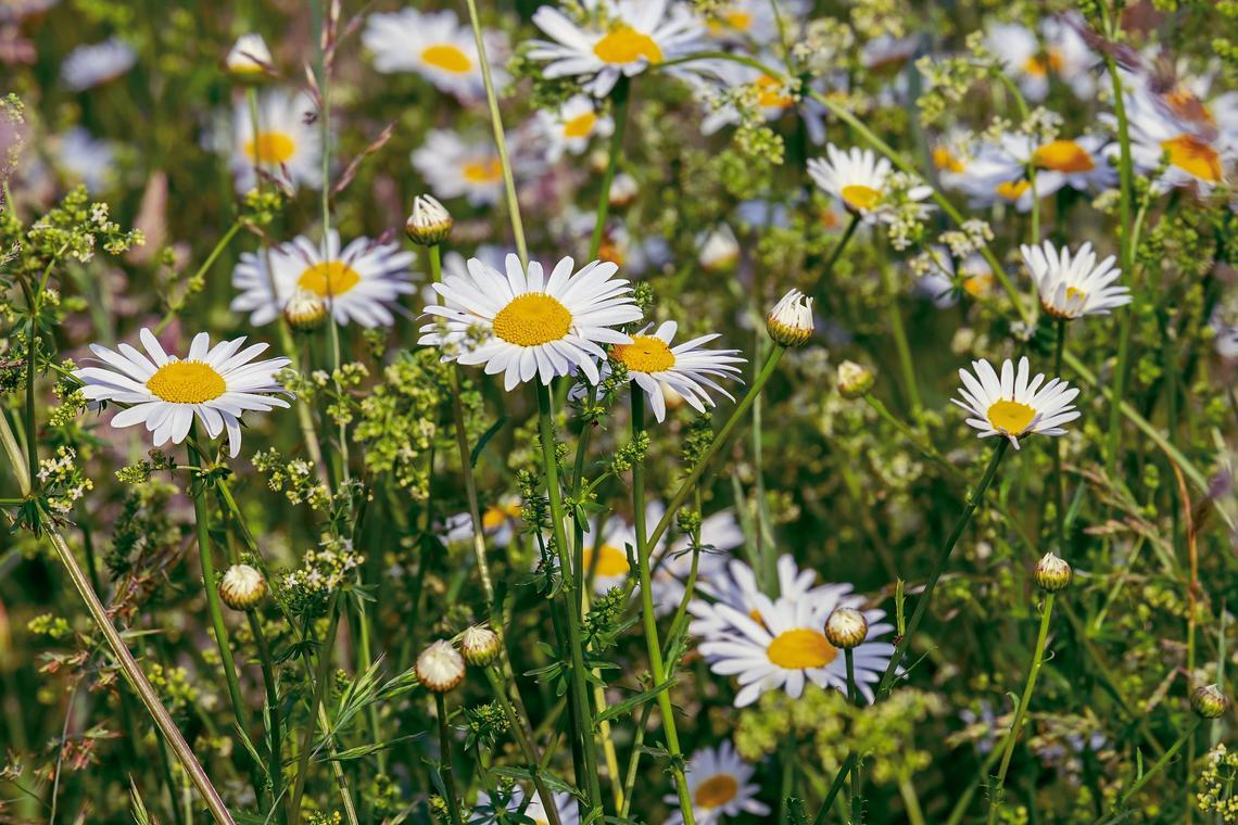 balade biodiversite -pouldreuzic-pays bigouden