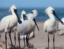 Balade ornithologique - Loctudy - Pays Bigouden