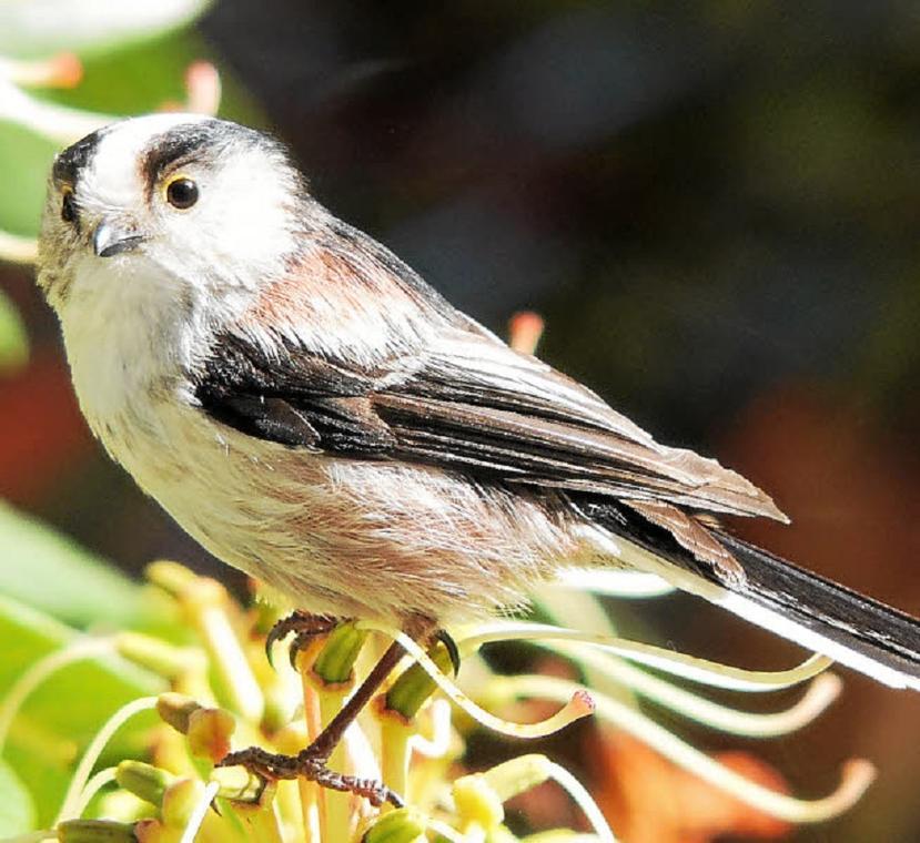 Initiation au monde des oiseaux - Balade nature - Pont-l'Abbé - Pays Bigouden