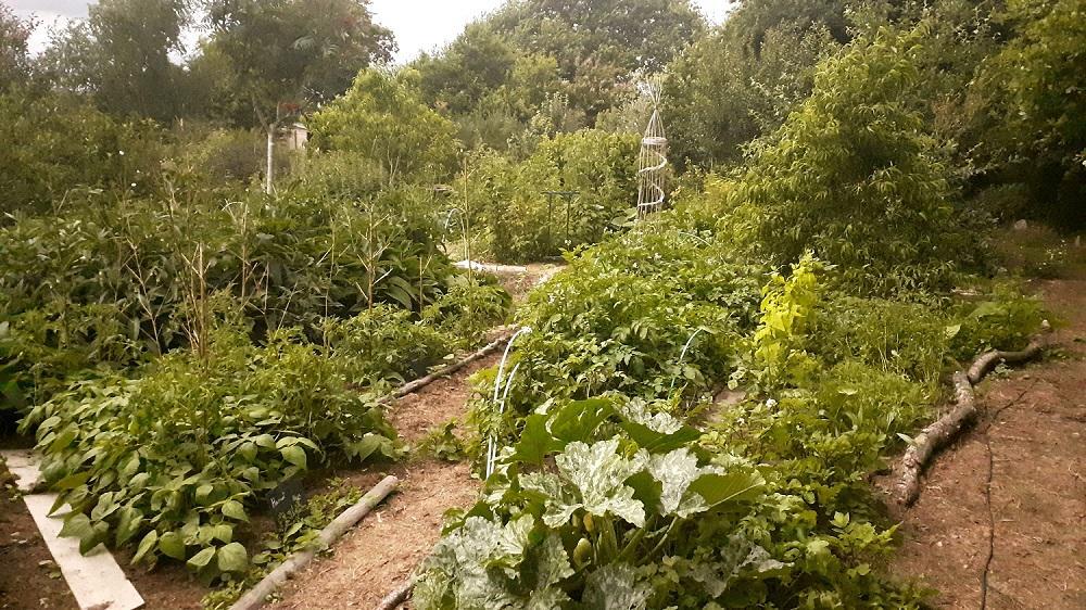 """Clairière potagère au sein du jardin-forêt - Éco-lieu conçu avec la permaculture """"La Pâture es Chênes"""""""