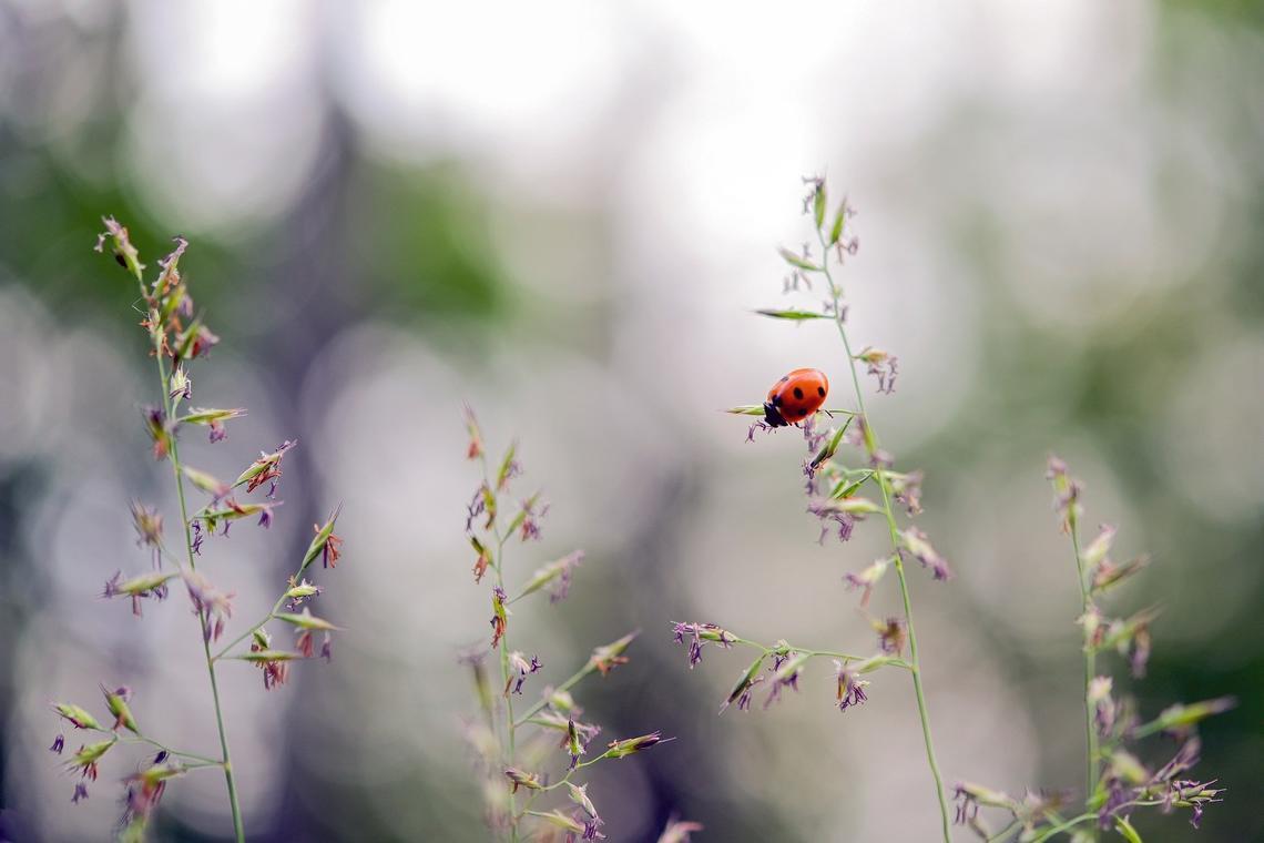 ladybug-5355655_1920