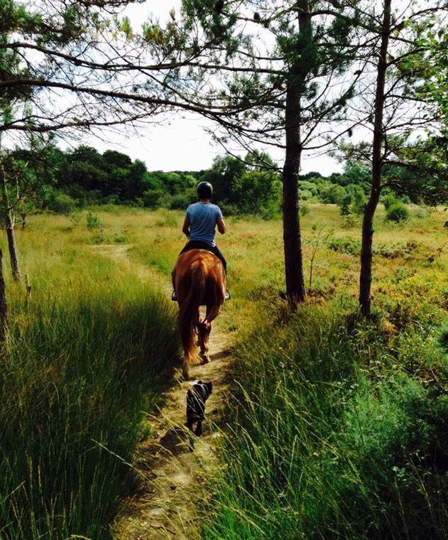 lamballe-equitation