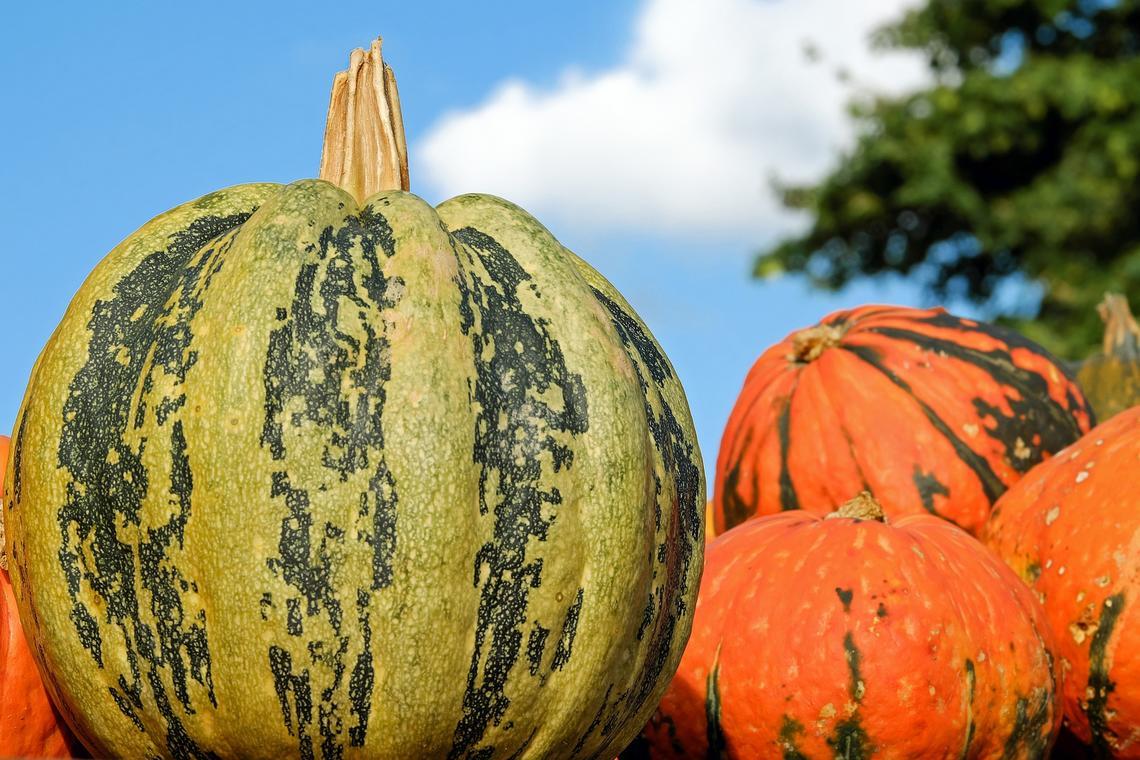 pumpkin-2740305_1920