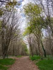 Bois de Saint Ronan