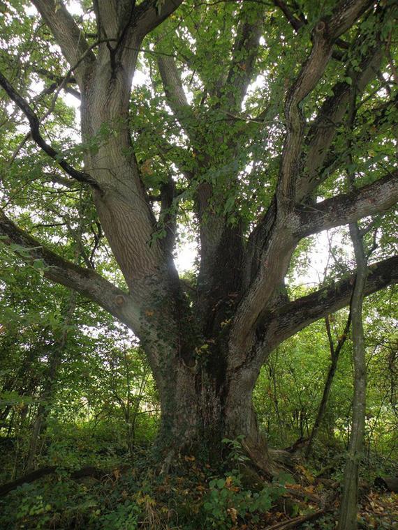 Atelier-Nature-Ressourcez-vous-aupres-des-arbres - Plomeur - Pays Bigouden
