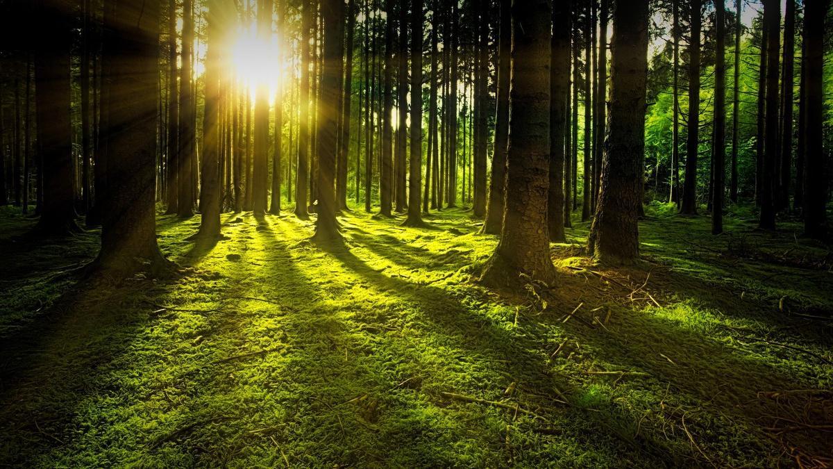 Atelier énergie des arbres 1 - Plomeur - Pays Bigouden Sud