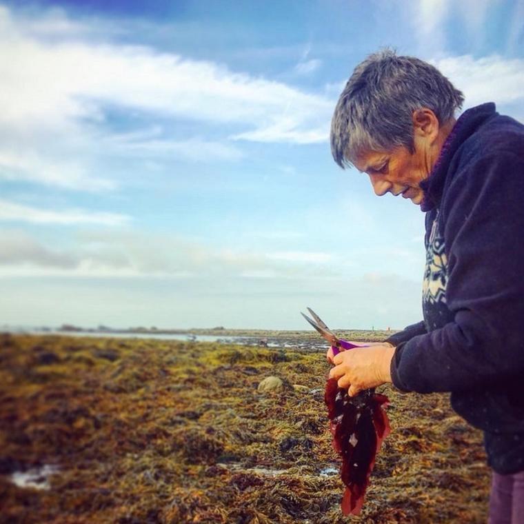 Initiation et découverte des algues alimentaires sur l'estran- Pays Bigouden