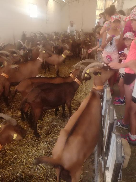 La rencontre avec nos amies Les Chèvres