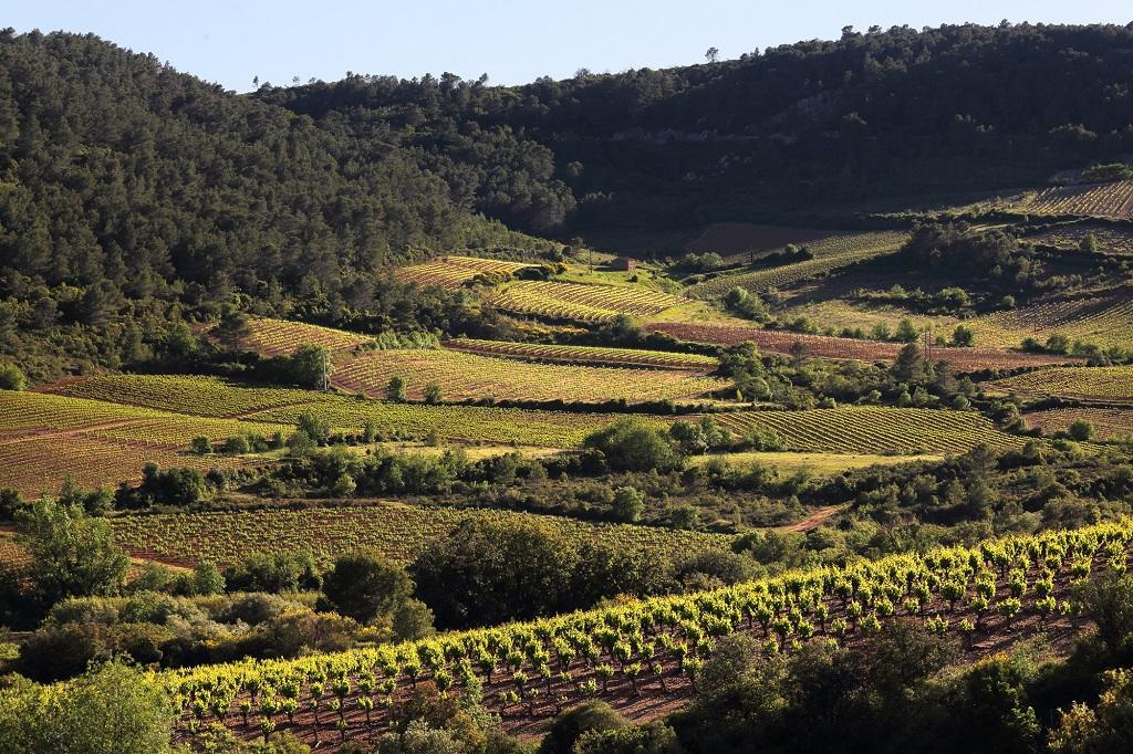 Vignoble de Saint-Chinian