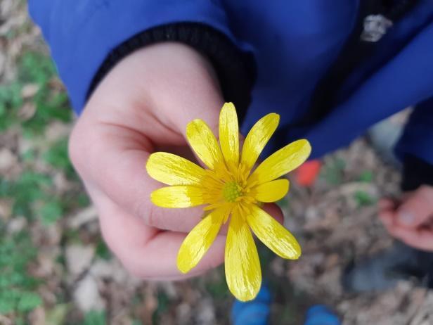 balade botanique enfant