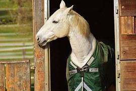cheval et écurie