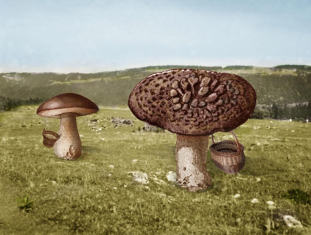 16- Plonk et Reponk_champignons