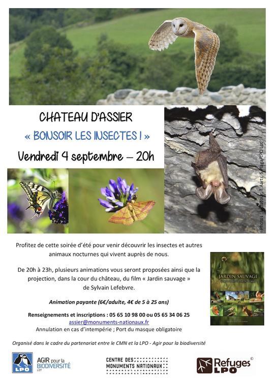 Affiche Soirée Bonsoir les insectes_4sept20_v2