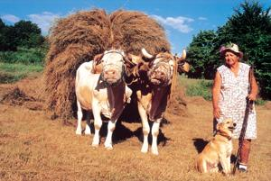 Femme paysanne 1
