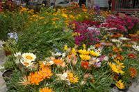 Foire aux fleurs
