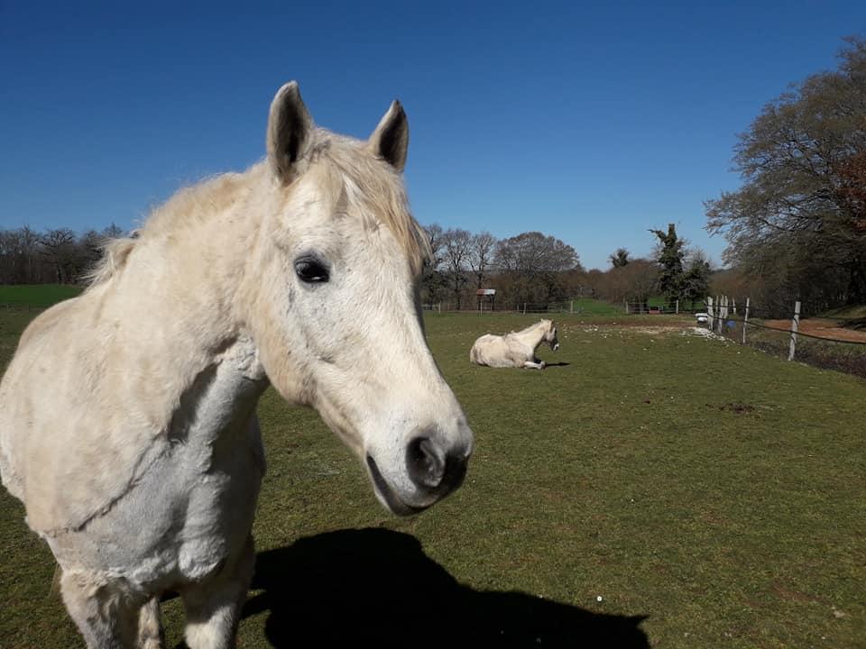 chevaux rock dart au soleil