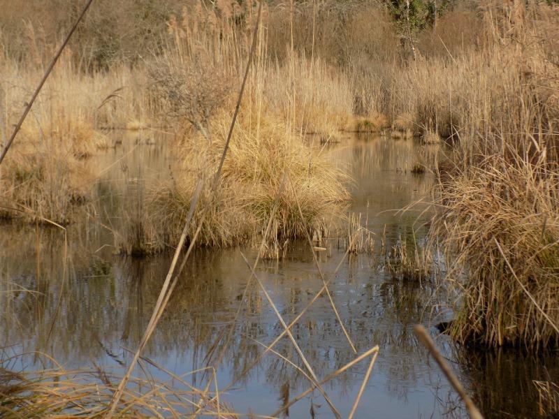 eau libre roselière-Marais de Bonnefont