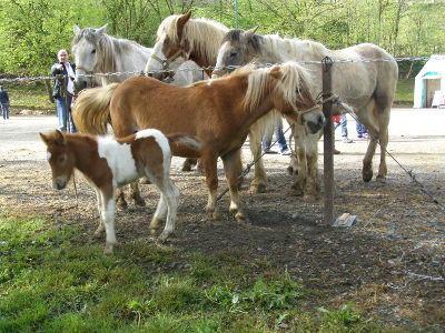 foire-chevaux