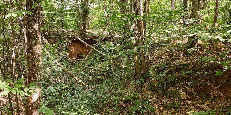 forêt vallée de la masse