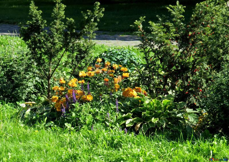 flower-rock-gardens-beds-garden-shrubs-41157