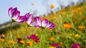 fleurs-troc aux plants
