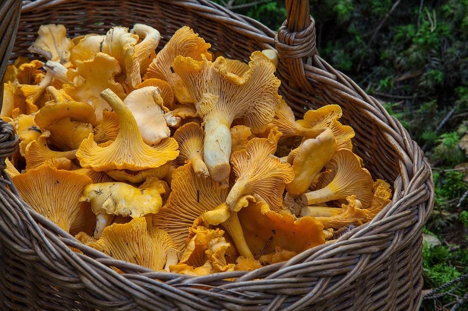 fungus-1194380_1280©Barbroforsberg