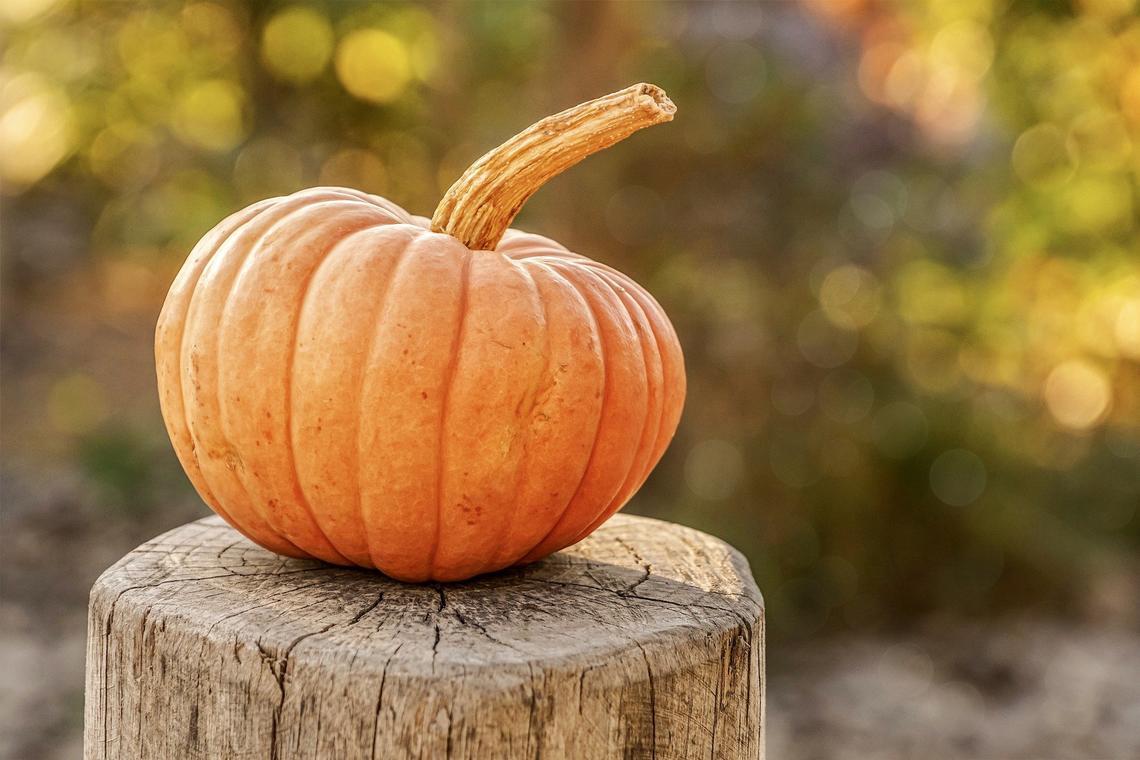 pumpkin-g421f56908_1920