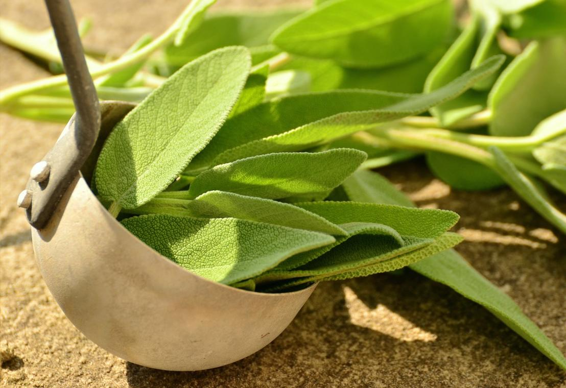 sage_herbs_culinary_herbs_healthy_tea_herbs_bless_you_herbal_plant_garden_plant-564262.jpg!d