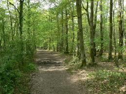 sorties forêt
