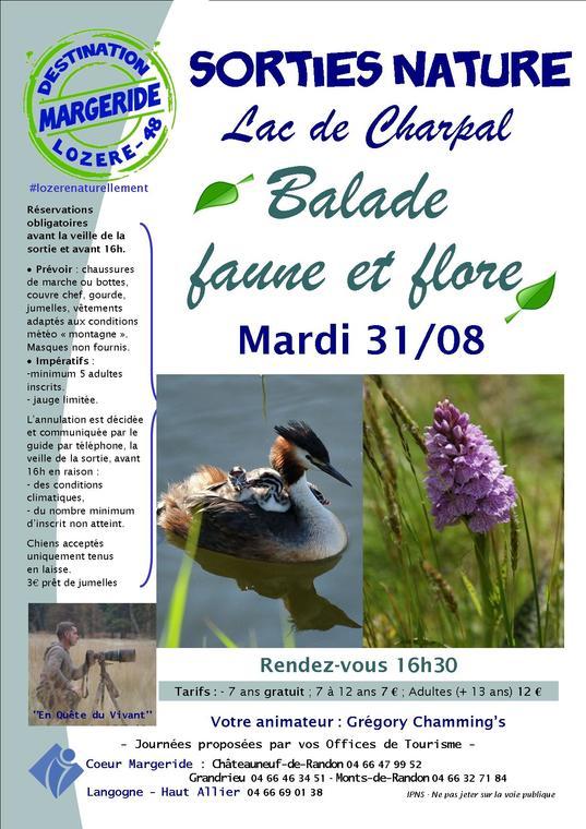 Sorties-Nature-Gregory-BaladeFauneetFlore-Charpal-31-08