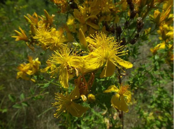 Sortie botanique Cristol Marie-Laure