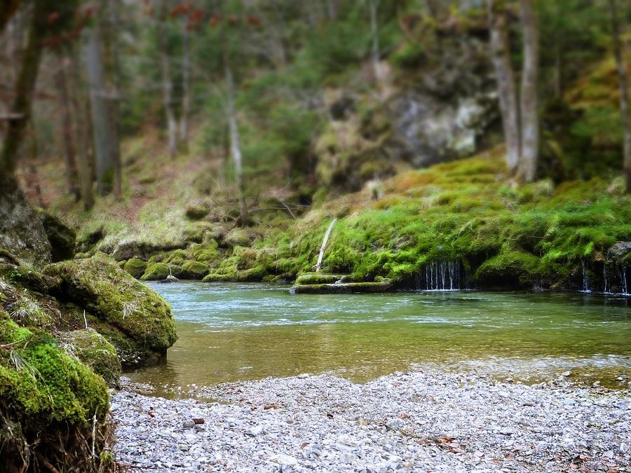 Bain de Forêt 4