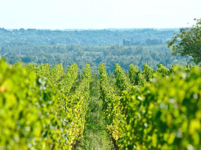 Vignobles Libournais