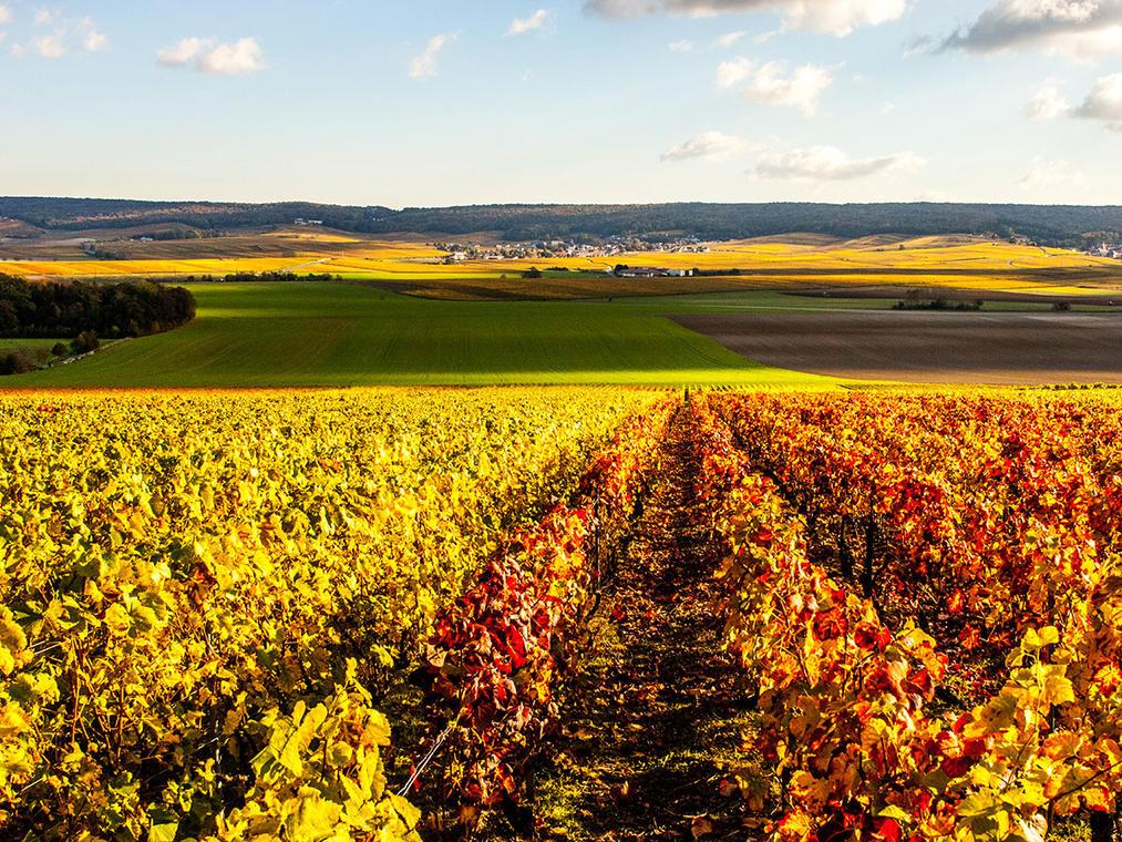 Vignoble de Chigny-les-Roses