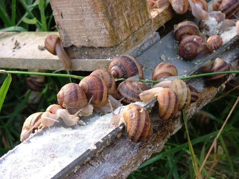 L'Escargot champenois - Vesigneul-sur-Marne