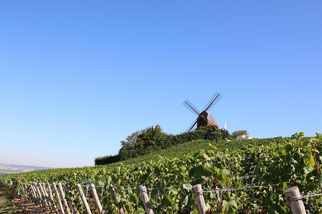 Le-moulin-de-verzenay-