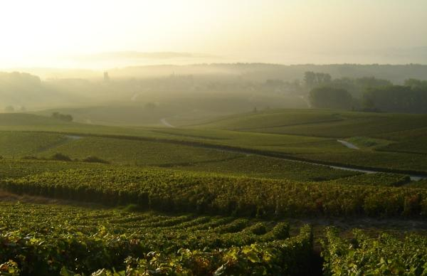 Vignes du Champagne Guy Blin-Laurent - Trigny