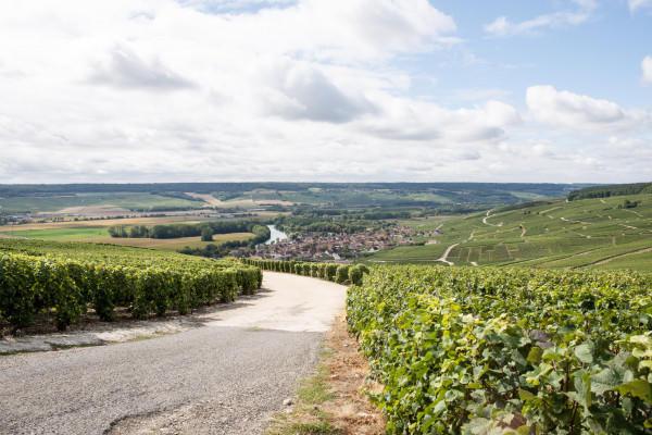 aprs-midi-epernay--producteurs-vignerons-champagne-depuis-reims-38371