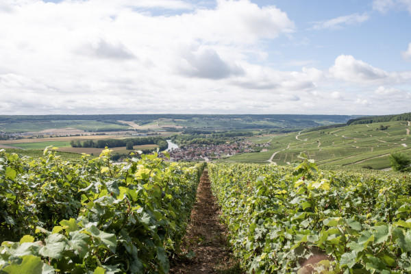 circuit-dcouverte-vigneron-champagne--djeuner-depuis-reims-38b4b