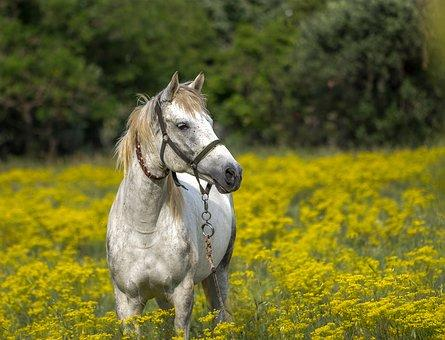 horse-3419146--340-2