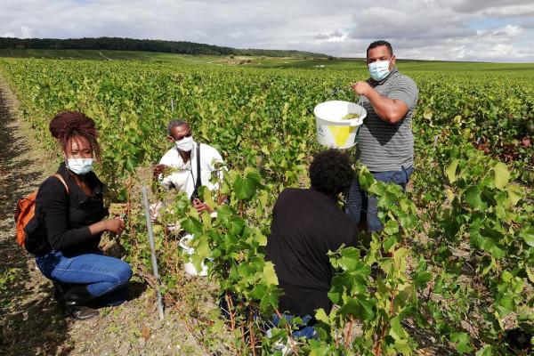 vendangeur-dun-jour-au-champagne-alfred-tritant-39a24