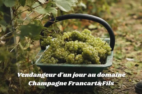 vendangeur-dun-jour-au-domaine-champagne-francartfils-3f8f7